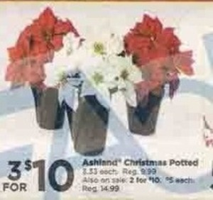Ashland Christmas Potted Poinsettia
