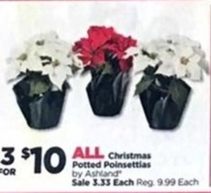 All Christmas Potted Poinsettias