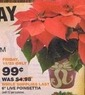"Home Depot 6"" Live Poinsettia"