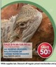 PetSmart All Bearded Dragons, Ball Pythons or Chinese Water Dragons