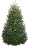 Lowes 7-ft to 8-ft Fresh-Cut Fraser Fir Christmas Tree