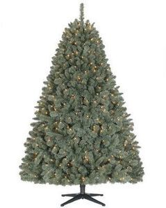 6' Westlake Spruce Blue/Green Tree